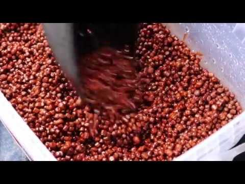 Starbaits Boilies Hot Demon Протеинови топчета 1 кг