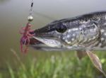 Силиконова примамка Crazy Fish Cray Fish 7.5см