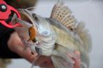 Силиконова примамка Crazy Fish Angry Spin 4.5см