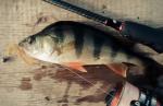 Силиконова примамка Crazy Fish Active Slug 5см