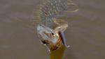 Силиконова примамка Glider 9см Crazy Fish